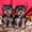 2 йоркширских щенков для продажи, ., ., , , , , , , , .... #68436
